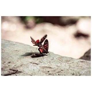 bugslife bugsofinstagram butterflies butterfly cinematic cinematicphotography cinematographer colorphotography febviz instanaturelover naturelover naturephotography poetry