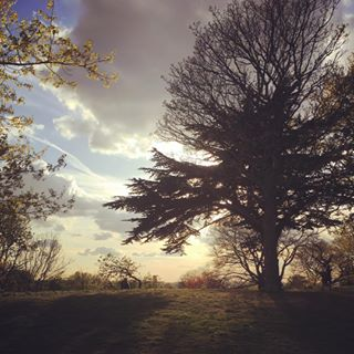 beauty explore walkabout iphonephotography clouds london parklife outdoors nature light healthyliving change iphone naturephotography exploration trees sunset photography