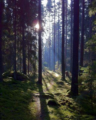 svampskogen swedishsummer 500px foresttrail magicforest photography
