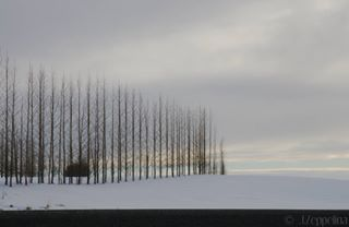 birches discovericeland geometrical goldencircle iceland icelandicnature ig_iceland landscape minimalism naturedesign roadtrip snow travellers_captures travelphotography trees