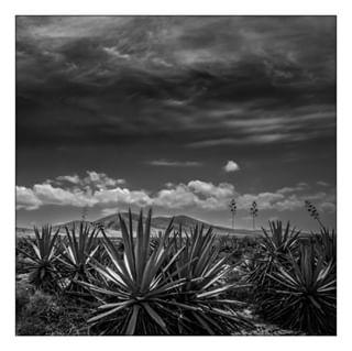elcotillofuerteventura landscapes