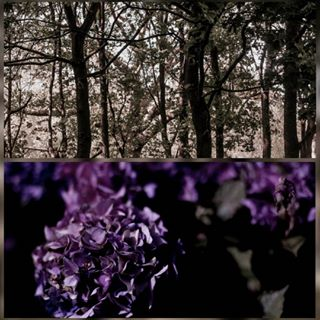 woodlands beauty photography existence trees flowers ilovenature life hydrangea photo nature canon
