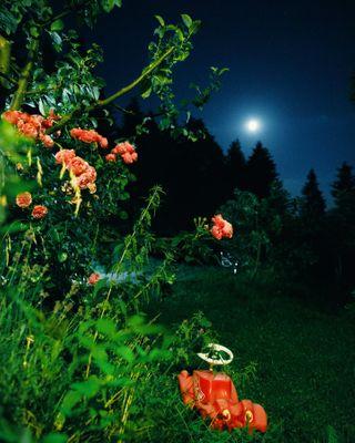 fineartphotography twinpeaksart pinkroses fullmoonnight spookygardens davidlynchworld davidlynch austriaphotography austriangirl