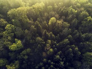 morning fly amazing stunning nature forest flight sunrise zurich aerial birdseyeview trees switzerland drone day beautiful soar viewfromabove viewfromthesky green breathtaking