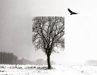 outdoors nature winter fog photoshop snowstorm photooftheday bird weather tree snow season landscape frost wood mist cold silhouetted sky frozen light