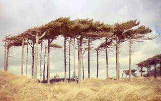 uk trees beach nature travel landscapelovers treestagram merseyside nationaltrust england formby liverpool landscapephotography landscape igersmersey tree instatravel