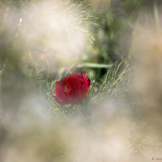 flowers red wild