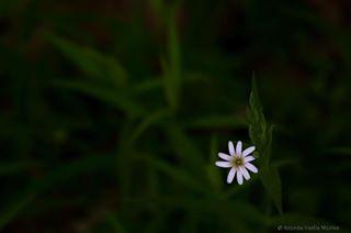 flowers landofbeauty nature naturephotography love