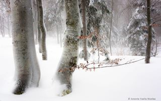maramures winter snow romania