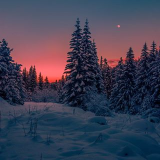 forest light trees beautiful explorebulgaria explore vscobalkan pink bulgaria vsco places snow winterwonderland mountain instasnow tale wintertale nature colours winter snowymountains colour snowland vscobulgaria rila sunset moon