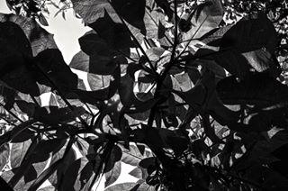 artphotography blackandwhite blackandwhitephotography bnw fineartphotography myart