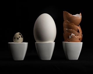 fotovakschoolrotterdam 500px workingatmyportfolio goose eggs 📸 photography kameraexpress quail youpic cameranu_nl 🐣 chicken studio studiolighting