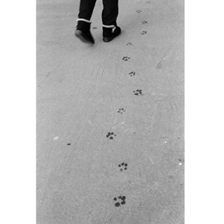 analoguecommunity filmisnotdead 🐾 analoguevibes streetphotography fomapan disparaencarrete dog 35mm fisheyelemag