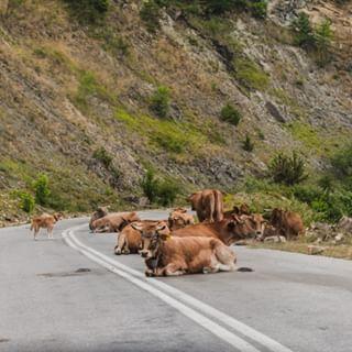 wildlifephotography nikongreece nikonphotography wildlife nikon pictureoftheday buffalo ways2kill road photooftheday