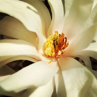 colors flower color texture photography white love yellow inspiration springiscoming