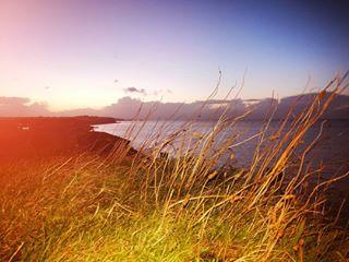 naturephotography southeast ocean cold country friends foraging november landscape sea seawall twilight uk coastal