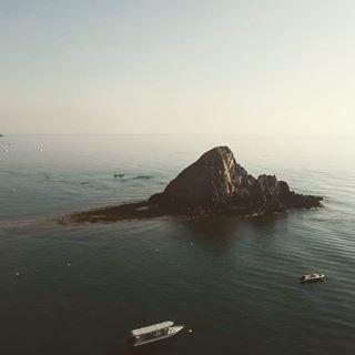 fish daddytime 🐡 🦈 reefshark djispark 🇦🇪 jellyfish aerial 🐢 uae fujairah snorkeling drone staycation shark weekendgetaway 🐠