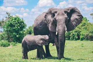 chobepark chobe lightroom globalyodel photography natgeo botswana animals africa safari elephant vsco vscocam
