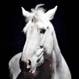 equinephotographer equineportrait equine