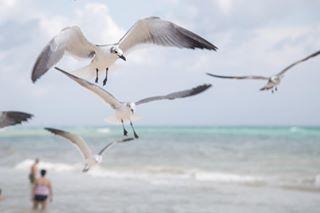 animal beach mexico nature naturephotography playa playadelcarmen rivieramaya sea seagull travel travelphotography vivamexico