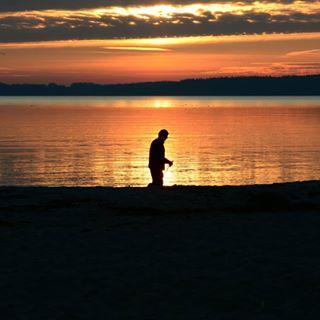 eckernförde enjoy schleswigholstein landscape early ocean beach life golden sunrise bird ostsee sea