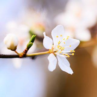 enjoy flowers moments colors nikon magic in lovely living life true spring love blessed sigma makro eckernförde natures