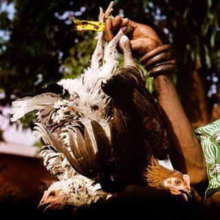 hasselblad500cm mali africa 120film