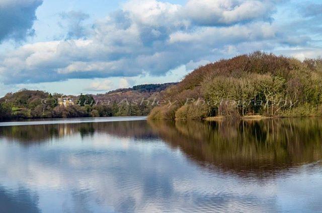 likeforlikes stilllife fineart forest photographer reflection blue photography landscape fineartphotography lake