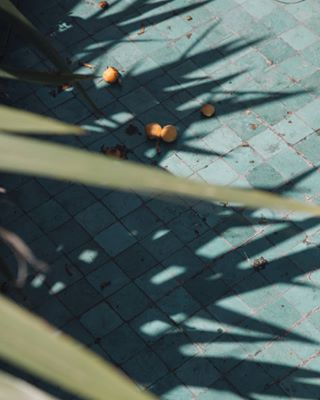 art blue contemporaryphotography fruit fruits minimalzine palmtree photodaily photographie photography photooftheday shadow somewheremagazine