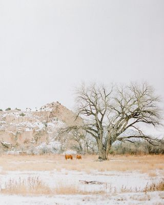 newmexicotraveling travelus radostinabosevaphotography newmexico wilderness iwantthisonmywall travelphotography