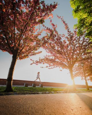 photographer beautifuldestinations homeexplore explore cherry jump budacastle home hungary sunset wideangle photography photo otherpointofview blossom cherryblossom totharpadsetany castle budapest travel