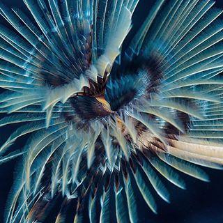 carolinnegrinphotography diving divingingreece spirograph underwaterphotography underwaterworld