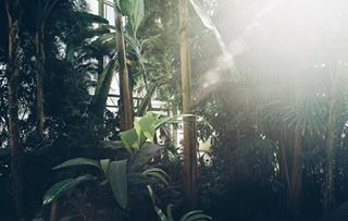 botanicals curatednature indoorplants inspiredbynature shadowsandlight urbanjungle
