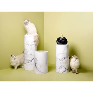 ragdoll photography stilllife wholetthecatsout stilllifephotography newwork bag accessories marble styling cats