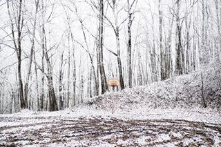 instanaturelover worldtravelbook hiking 2017 instagoodmyphoto earthgallery hoops explore outdoors exploretocreate wkupj theoutbound 2016 justgoshoot nature livefolk kentucky blank