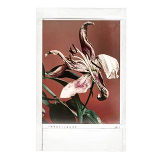 flower flowers lilium