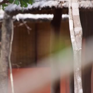 canon niassalionproject moçambique wildlifeplanet birdsofafrica africanwildlife africanbirds niassareserve birdsofinstagram mozambique natgeotravel böhmsbeeeater natgeo