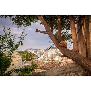 animals athens cat catsofgreece catsofinstagram cute felines likeaboss naptime nature sleepingbeauty tree