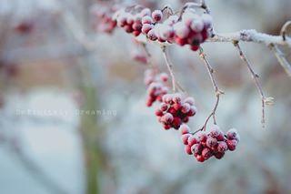 frosty creativehappylife postitfortheaesthetic lensbaby natureisbeautiful winterwonderland velvet85
