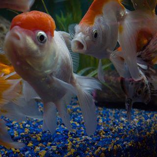 Portfolio Aquarium  photo: 0