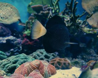 Portfolio Aquarium  photo: 1