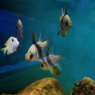 Portfolio Aquarium  photo: 2