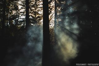 smoke camping nature trees