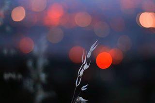 lucecurated moods_in_frame exploreyourcreativity lightzine madaboutarts2019 modernbe specialfilm minimal_greece bestfilmphoto photoobserve 50mmphotography summersunselection 35mmfilm phornography camparigreece greece_moments youpic greece_opa_opa photozine classicsmagazine vintage_greece spicollective filmisalive naturelover world_photography_page photocinematica goldmoony sugarcoatmag phasesmag lensbible