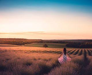fields sunset lavender