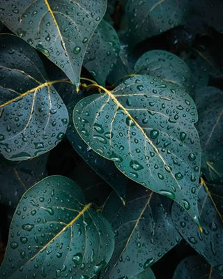 color colorful colors drops green greenleaf greenleaves instadaily instaday instagood instamood instanature instaphoto leaf leaves lightroom lovenature macro mi9 nature naturetexture rain raindrops smartphone summer summerrain texture xiaomimi9