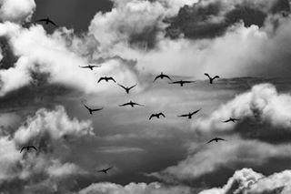 liveforthestory picoftheday photography wildlife visualart romania roxanaoros canonromania photographyislife danube danubedelta photooftheday roshani visual corvusmarinus canon birds photographyday visitromania
