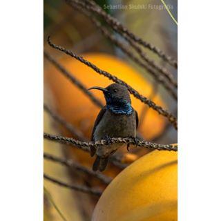 bird bb_of_ig summer seychelles