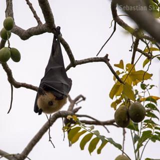 afrika bat nikonphotography nikon seychelles amateur