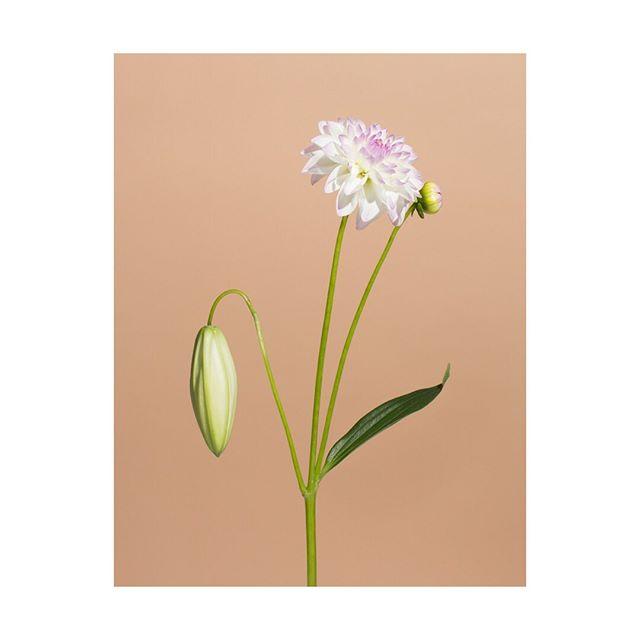 studio flowers construct plants stilllife realnotreal